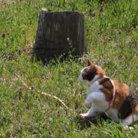 蝶・花・燕・猫