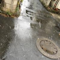 東京に初雪。
