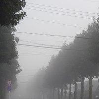 今朝の放射霧