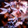 6/6 東方永夜抄 そのいち
