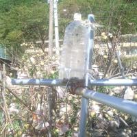農園でスズメバチを1000匹駆除!