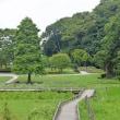 猛暑日の新林公園湿性植物園