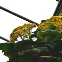 名称不詳の花
