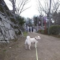 ぽん子と散歩....その弐。
