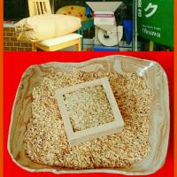 新米「光明自然農法玄米」が、入荷しています!