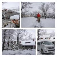 連日の雪かき