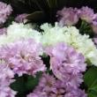 オシャレな夏の花