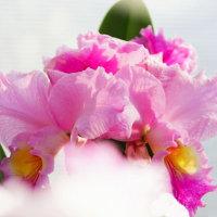 蘭 (花 4255)
