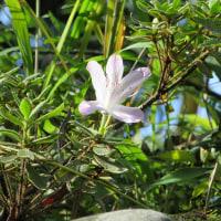 10月河原の野草