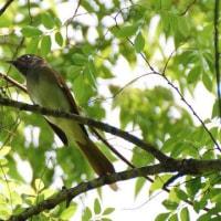 鳥見 13