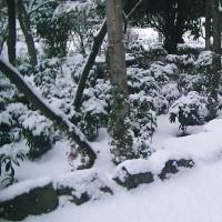 播州地方の初雪