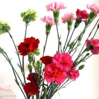 新しい花は古い花を枯らす