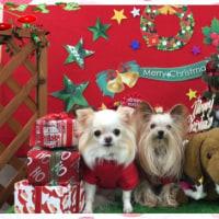 ゆうきと みづきの Christmas season...part 1