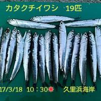 笑転爺の釣行記 3月18日☀ 久里浜海岸