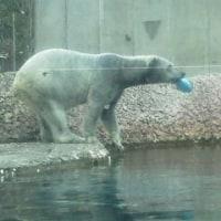 白熊のお気に入り