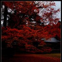 枕木山で紅葉を…