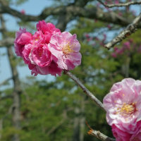 京都御苑 (2)