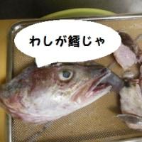 鱈の頭は出刃でも歯が立たん!