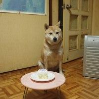 鈴、8歳になりました♪