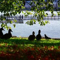 湖畔で休むin大津市