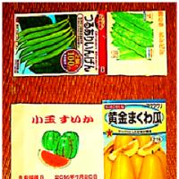 夏野菜 種 の 直播き 開始 – 2