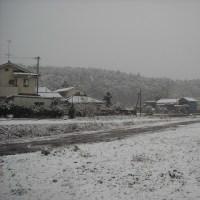 降りましたね雪