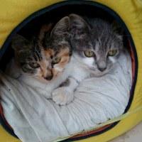 チビちゃんとミケちゃん