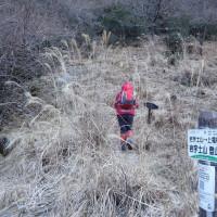 福寿草を観てきました