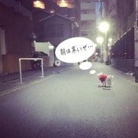 """始まったぞ """"よなかんぽ & 早朝んぽ"""" 祭り"""