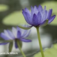 神代植物園・温室、リニューアル。