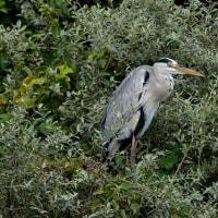 半年ぶりの出島野鳥園
