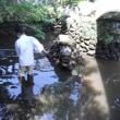 弁天池の清掃