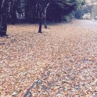 今年も秋が終わっていく