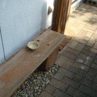 落語「猫の皿」現代版