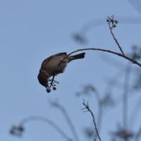 小鳥たちをよく観察できています