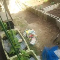 【我菜園便り】根菜「丹波系の山芋」に初挑戦