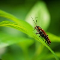 虫も元気、初物写真!!
