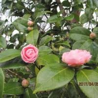 春なのに~♪春なのに~♪・・・ブログ更新しました!