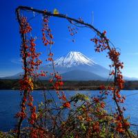 富士に生け花
