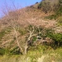 桜も終わり今日は嵐