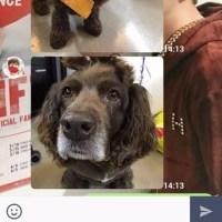 グンちゃんLINE スニちゃん(^○^)