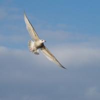 2月18日の鳥撮り散歩2・・・