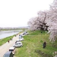 デジブック 『桃源郷に帰る』  一目千本桜と涌谷城の桜を愛でる