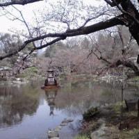 2017   桜 の 頃 の  東 京 日 比 谷 公 園