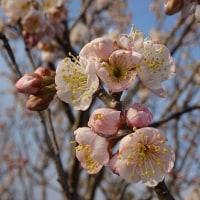 無情の春風