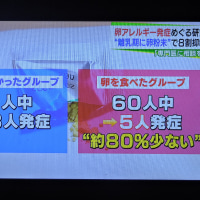"""12/10 アレルギー 卵の""""実験"""""""