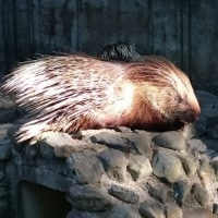 羽村動物園に行って来ました!「交通事故専門治療立川ヒロ整骨院」