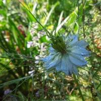 庭の花の色