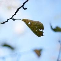 秋の、、ふぉと。。