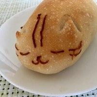 Cosmos, GT, ねこパン